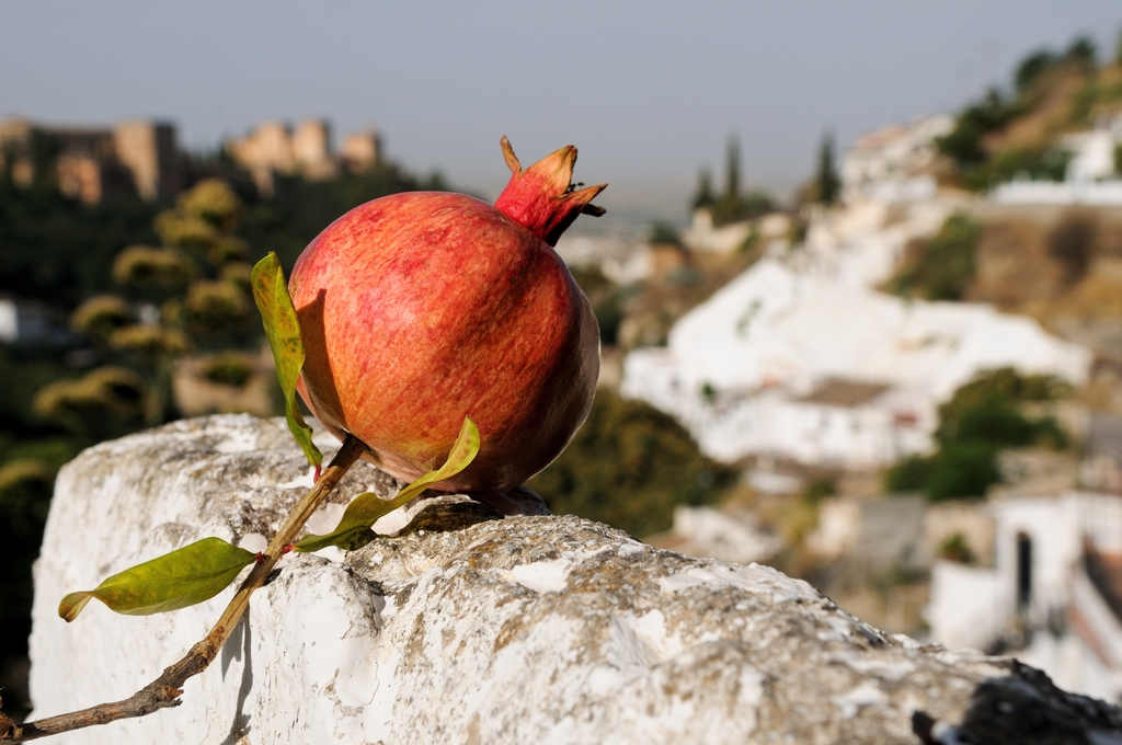Autumn is the season of the pomegranate, the city's symbol.